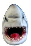 Shark, model of a head Stock Photo