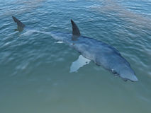 Shark in murky water Stock Images