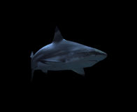 Shark near the rock at the deep blue ocean isolated at black Royalty Free Stock Photography