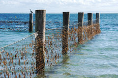 Shark Net in North Stradbroke Island, Queensland. Stock Image