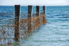 Shark Net in North Stradbroke Island, Queensland. Shark net to keep a safe area for people to swim during the day. Located at Amity Point on North Stradbroke royalty free stock photos