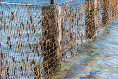 Shark Net in North Stradbroke Island, Queensland. Shark net to keep a safe area for people to swim during the day. Located at Amity Point on North Stradbroke royalty free stock photo