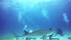 Shark obeys diver underwater in Atlantic Ocean.