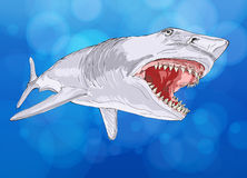 Shark with open mouth Royalty Free Stock Photos