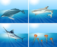 Shark and other sea animals in the sea Royalty Free Stock Images