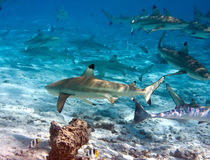 Shark over a coral reef at ocean Stock Photo