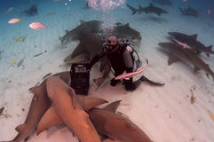 Shark Pack Stock Photos