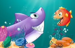 A shark and a piranha under the sea. Illustration of a shark and a piranha under the sea Stock Photo