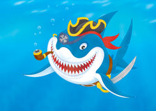 Shark pirate Stock Image