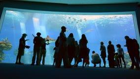 Shark Pool of Coral World Underwater Observatory aquarium in Eilat, Israel. EILAT, ISR - APRIL 16 2015:Visitors in the Shark Pool of Coral World Underwater stock footage
