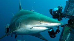 Shark proceeding towards shooting equipment Royalty Free Stock Photo