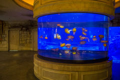 Shark reef Royalty Free Stock Photos