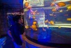 Shark reef Stock Photos