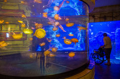 Shark reef Stock Photography