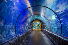 Shark reef Stock Images