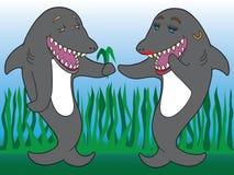 A Shark Romance Stock Photo