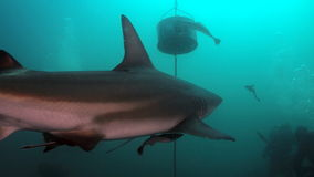 Shark's back view Royalty Free Stock Photography