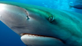 Shark's deep eye Royalty Free Stock Images