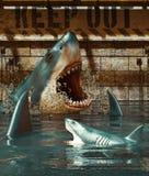 Shark`s Tank Please Keep Out Stock Photo