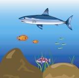 Shark sailling in ocean Royalty Free Stock Photos