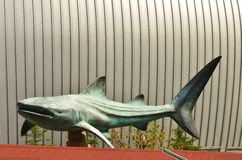 Shark sculpture. On background of a modern architectural stock photos