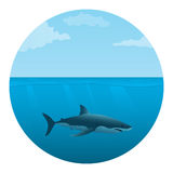 Shark in the sea Royalty Free Stock Photo