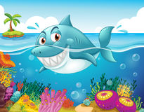A shark in the sea with corals. Illustration of a shark in the sea with corals Stock Photos
