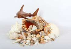 Shark and Sea Shells Royalty Free Stock Photography