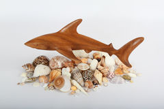 Shark and Sea Shells Royalty Free Stock Images