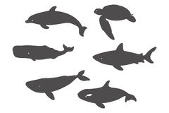 Shark, Sea Turtle, Dolphin and Whales. Royalty Free Stock Photography