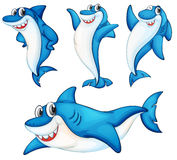 Shark series. Illustraiton of comical shark series Royalty Free Stock Images
