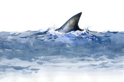 Shark (series C). Painting of shark's fin over the water (series C Royalty Free Stock Images