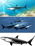 Shark set Royalty Free Stock Image
