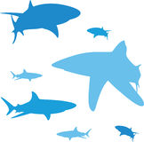 Shark silhouette. The various aspects of ground white sharks Stock Images