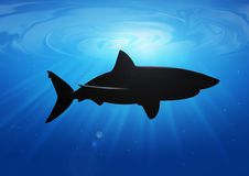 Shark silhouette Royalty Free Stock Images