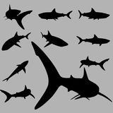 Shark silhouette set Stock Photos