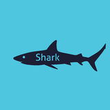 Shark silhouette  Royalty Free Stock Photo