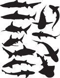 Shark Silhouettes Royalty Free Stock Image