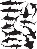 Shark Silhouettes. Twelve silhouettes of various kinds of sharks. Alternate file format is illustrator 8 .ai Royalty Free Illustration