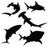 Shark  silhouettes set. Sea fish, animal swimming, fauna illustration,  on white Royalty Free Stock Photo