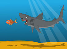 Shark and small fish Royalty Free Stock Image