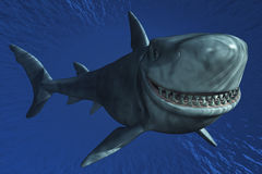 A Shark Smiling Royalty Free Stock Photo