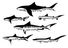 Shark species Stock Image