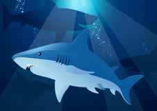 Shark swimming. Royalty Free Stock Photos