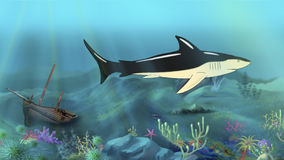 Shark Swimming. Digital painting of the swimming Shark in the depths of the ocean Royalty Free Stock Images