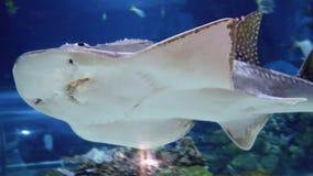 Shark swimming underwater Royalty Free Stock Photography