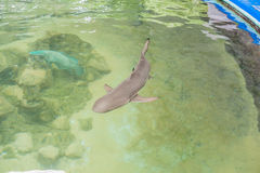 The shark swims in the aquarium. View from above. Marine inhabitants concept. Ichthyology concept Stock Images
