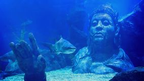 Shark Swims Near Submerged Ancient Statue Of Man stock video footage