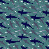 Shark tile Royalty Free Stock Photo