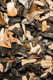 Shark Tooth Background. A close up of shark teeth in a shop in Cape Cod Massachusetts stock photos
